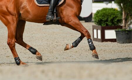 Horse and rider in gallop movement on a show jumping tournament