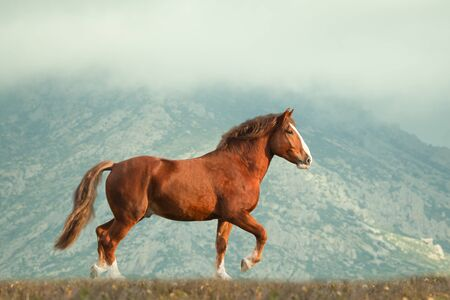 Heavy draft horse moving in mountain landscape