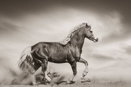 Chestnut wild pony in desert galloping, sepia tones