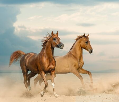 Beautiful chestnut horses on a seaside