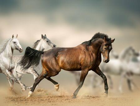Beautiful horses in desert running wild
