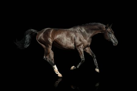 Black horse on a black background running fast Imagens