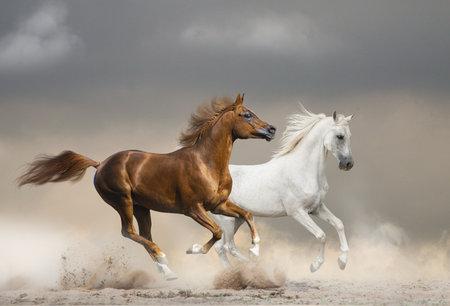 Arabian horses running wild against the stormy skies in desert