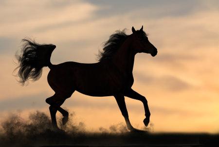 Silhouette of one arabian stallion trotting at sunset