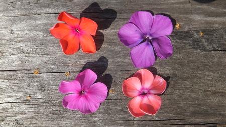 petites fleurs: Quatre petites fleurs aux couleurs vives sur fond de bois