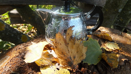 hojas secas: Tetera en hojas secas