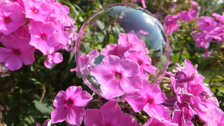 pinks: Bubble on pink flowers