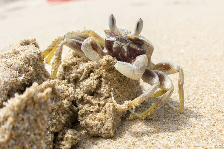 Sand crab on a pile of sand on a beach, Vietnam 스톡 콘텐츠