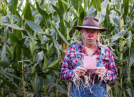 Scarecrow gets a pink slip in the corn field. photo