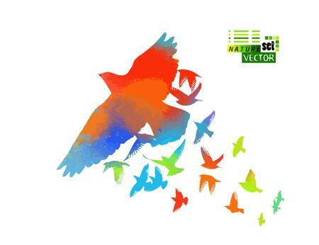 Aves multicolores. Una bandada de pájaros arcoíris voladores. Ilustración vectorial