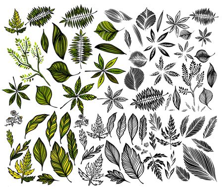 A large set of different leaves. Vector illustration Stock Illustratie