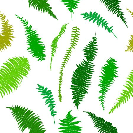 The seamless background leaves the fern. Vector illustration 向量圖像