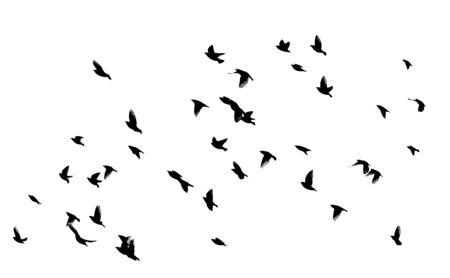 A flock of flying birds. Vector illustration Vektorové ilustrace