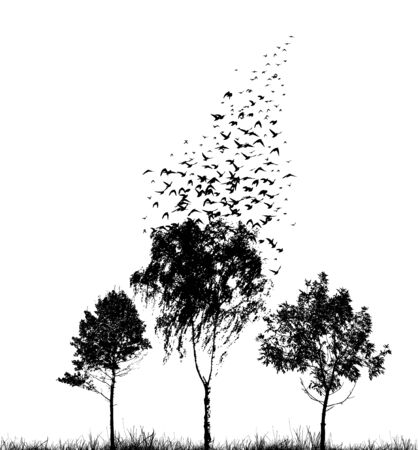 Silhouettes of trees with flying birds. Vector