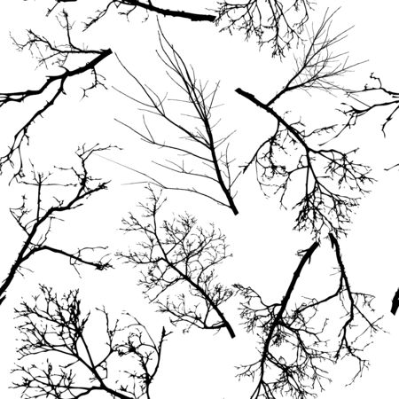 The seamless background is the silhouettes of the trees. Print tree branches. Vector illustration