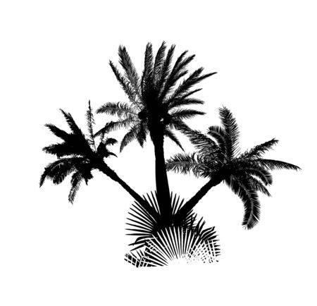 The silhouette of palm trees. Vector illustration