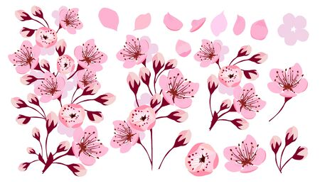 Sakura flowers. A set of items. Vector illustration