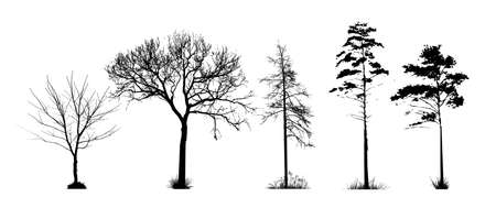 A set of silhouettes of trees. Vector illustration