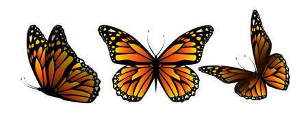 Flying orange butterflies. Vector illustration