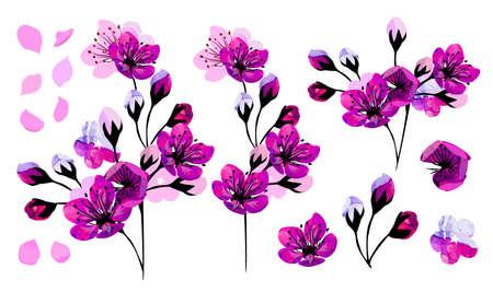 Sakura flowers. A set of items. Vector illustration