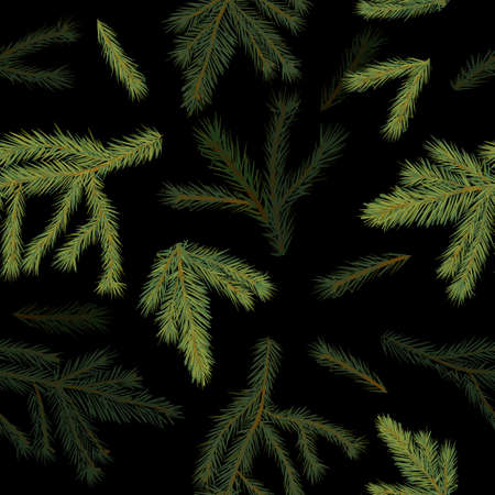 A set of cones and spruce branches. Vector