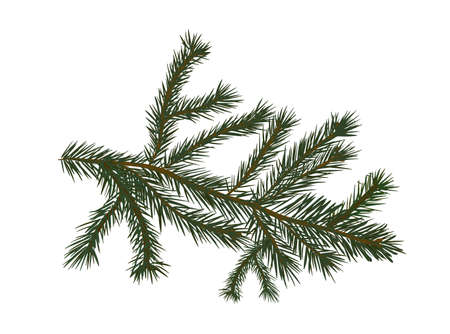 The object is a spruce twig. Vector illustration