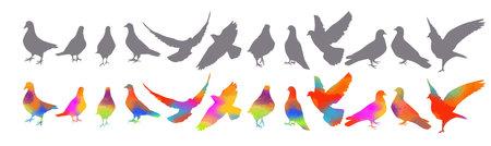 Bird watercolor. Set Colorful pigeons. T-shirt print. Vector illustration