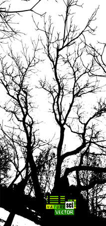 Background with silhouettes of branches of trees