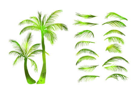 green Palm trees. Palm leaves. Vector illustration