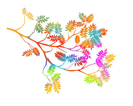Summer tree branch with fresh multicolored leaves. rowan leaves. Vector illustration