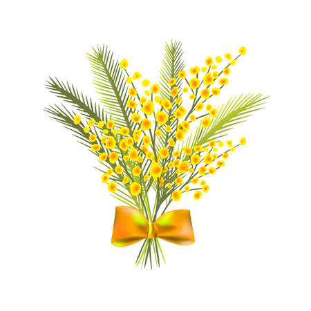A bouquet of mimosas. Vector illustration 向量圖像