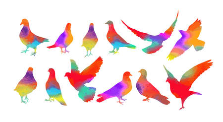 Bird watercolor. Set Colorful pigeons. T-shirt print. Vector illustration 向量圖像