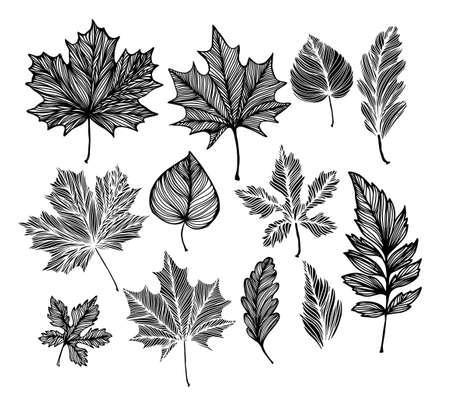 Skeletonized decorative leaves. Vector illustration