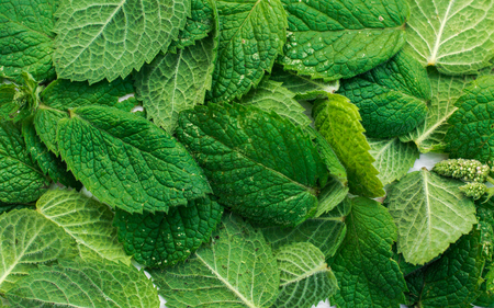 The texture of mint leaves