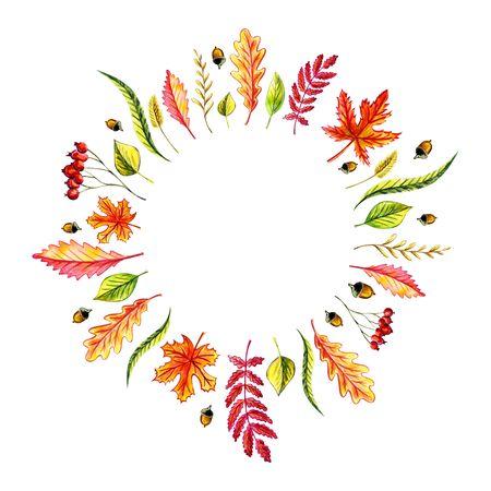 Autumn leaves wreath: maple, birch, willow, oak, acorn, birch leaves, blade of grass, rowan leaf, rowan berries, grass spike. Watercolor illustration Isolated objects Decoration Handwork Draw Zdjęcie Seryjne
