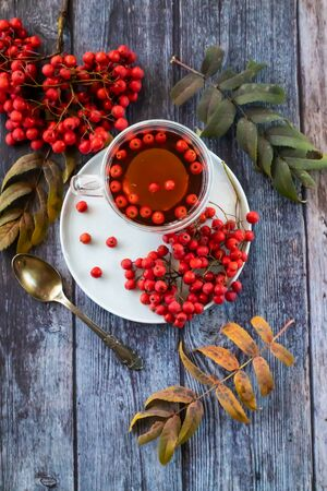 Hot healing tea, mountain ash tea. Reduces the level of harmful cholesterol in the blood, strengthens blood vessels. healing drink