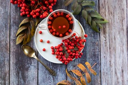 Healing broth, mountain ash tea. Reduces the level of harmful cholesterol in the blood, strengthens blood vessels. healing drink drink