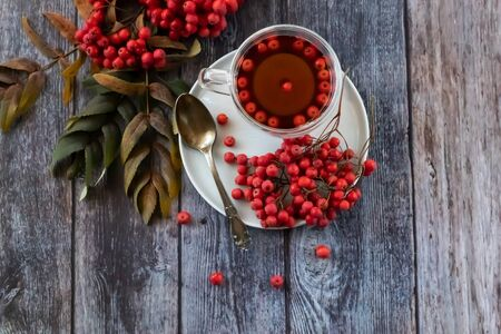Hot healing tea, mountain ash tea. Applied with a lack of vitamins, anemia, metabolic disorders. Reduces bad cholesterol in the blood, Healing drink in a cup Stock fotó