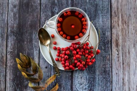 Hot healing tea, mountain ash tea. Applied with a lack of vitamins, anemia, metabolic disorders. Reduces the level of harmful cholesterol in the blood, strengthens blood vessels. Healing drink in a cup Stockfoto