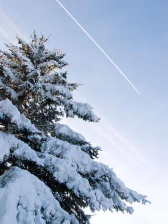 pinetree: Picture of frozen snow pine-tree with airplane on the sky