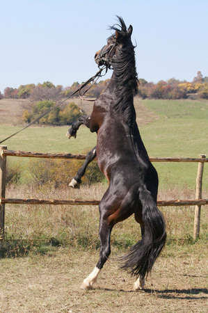 Picture of saddle horse Stock Photo