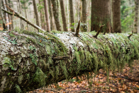 overgrown: An old fallen tree overgrown with moss Stock Photo