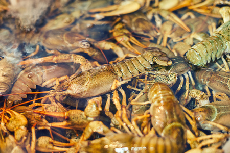 Background of freshwater crayfish in the water close-up