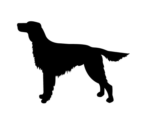 silhouette dog: vector dog black silhouette, irish setter isolated