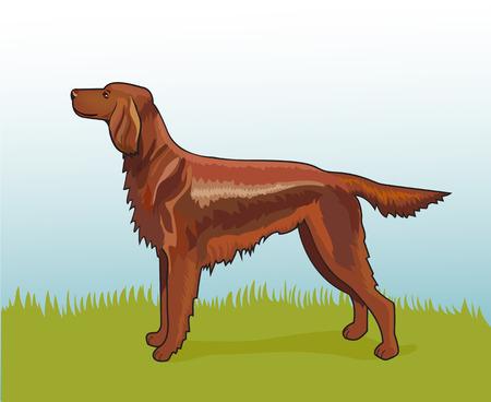 perro caricatura: ilustraci�n vectorial realista perro setter irland�s en la hierba Vectores