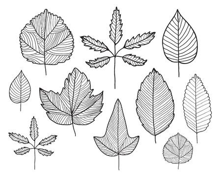 herbarium: vector set of hand drawn doodle line leaves, herbarium, plants, autumn, spring