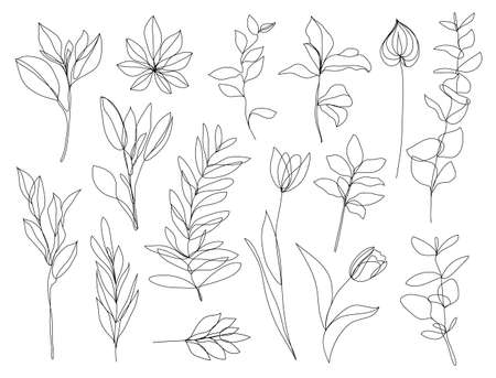Vector set of hand drawn, single continuous line flowers, leaves. Art floral elements. Use for t-shirt prints, cosmetics and beauty design Illustration