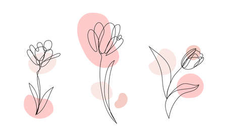 Vector set of hand drawn, single continuous line flowers - tulip, leaves. Art floral elements.