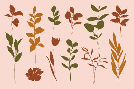 Vector Set of Leaves and Branches. Silhouette leaf, plants, tulips, Olive Branch. Illustration for printing on t-shirt, beauty products, Posters, creating a logo