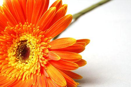 Orange flower on a background photo